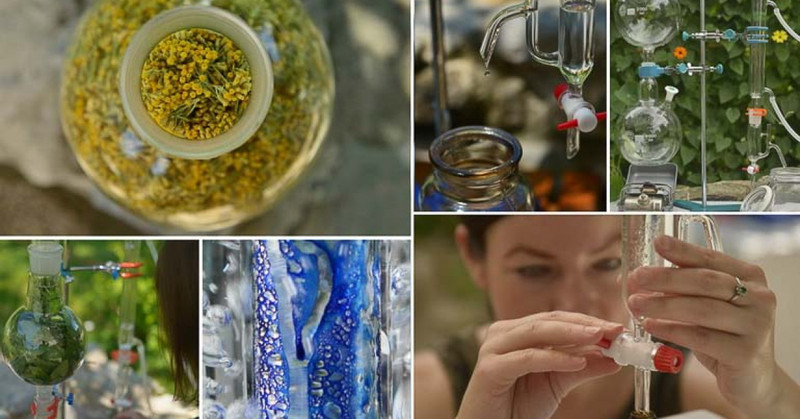 Spletni tečaj: Destilacija in hidrolati